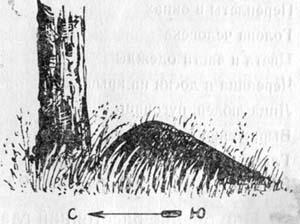 Определение сторон горизонта по муравейнику